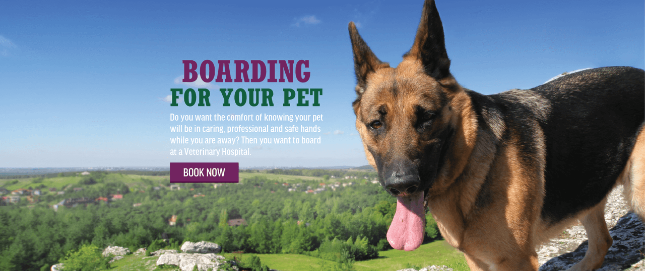 Boarding Your Pet? Book Now!